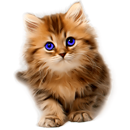 Painted Kitten